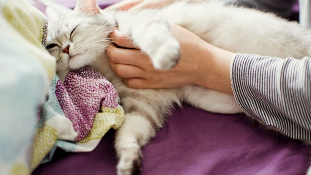 Some pre labor signs in cats to look for